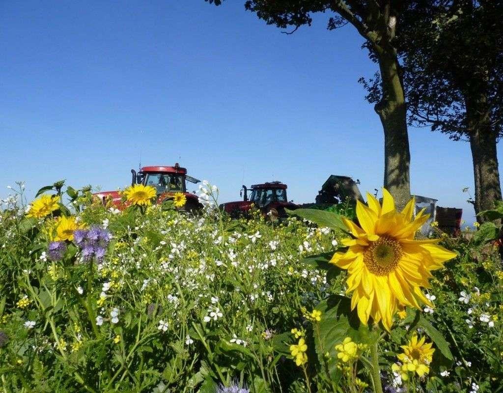 environmentally-friendly-farming-uk